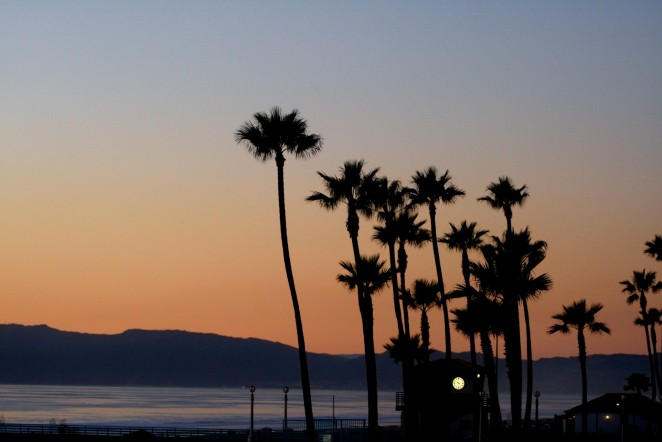Manhattan Beach Palm trees sunset