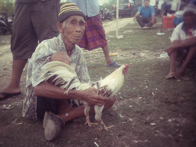 balinese man with siap rooster