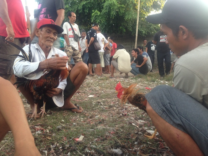 balinese men holding rooster