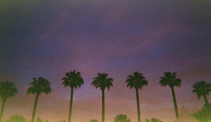 coachella palm trees