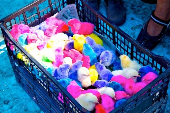 colored chicklets el salvador